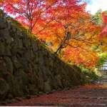 深秋再訪京都:《京都一年》選摘(1)