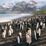 企鵝可愛,但是很臭...「企鵝好臭」真正的原因其實是?