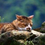 猴硐辦元旦升旗典禮 動保團體憂影響貓咪作息