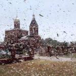 成千上萬蝗蟲襲擊俄羅斯 農業部宣布進入緊急狀態