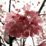 陳芳明專文:愛的輓歌