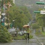 觀點投書:颱風過後,說好的SOP呢?