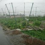 觀點投書:政府應積極開辦農作物保險機制