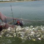 霸王級寒害重傷害!全國農損近6500萬元 番茄、虱目魚最嚴重