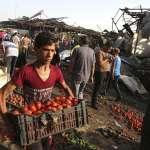 全球暖化的深層衝擊:糧食震盪