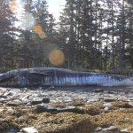 30餘鯨豚死亡擱淺阿拉斯加 疑有毒海藻釀禍