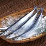 歐盟發出「黃牌警告」 要台灣改善非法捕撈