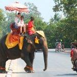 過勞引殺機?泰國大象刺死象夫 旅客被載入叢林