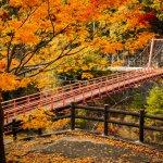 想去日本賞楓,現在該排行程了!3個京都人口耳相傳的「紅葉狩」景點
