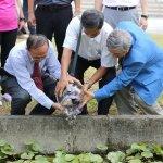 噴藥影響生態 南華大學放萬隻泥鰍防登革熱