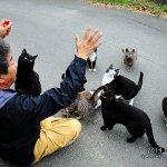 貓比人多!日本最大「貓島」讓所有貓奴都融化