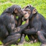 動物也會自慰嗎?他一開始也不相信,直到遇見了那隻黑猩猩...
