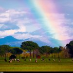 彩虹的盡頭會有什麼呢?可口可樂製造大型彩虹,要帶你一窺那神秘的終點!
