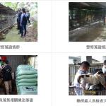 牠們需要一個家! 非法繁殖場345隻名犬可望被認養
