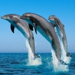 終止圈養海豚,數位實景互動表演可成出路?