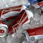 全球啤酒業大震盪 安海斯─布希英博4兆元併購南非米勒