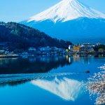 讀者投書:櫻花映染湖面,可遇不可求的水中「逆富士」美景