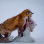 「宛若脫下自己的毛皮大衣」 野生動植物攝影展首獎發人深省