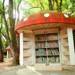這樣的圖書館,其他地方有嗎?京都2處濃密森林中的書庫