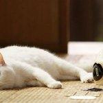 讓皇上的肉球來療癒你,10部貓奴必看的超療癒電影!