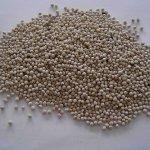 日本最新研究:白蘇種子的「木犀草素」可防肝炎肝癌