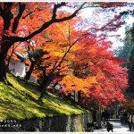一張車票逛完京都最美的紅葉!賞楓必備的叡山電鐵沿線散步攻略