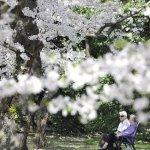 單人華爾滋:《京都寂寞》選摘(2)