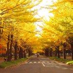 日本最美的5個秋天秘境!飄落的銀杏葉如同下起了黃金雨…