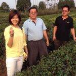 想想觀點》台灣茶的未來:加入物聯網的全球革命