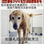 毛小孩求救!高雄市關懷流浪動物協會鬧飢荒 亟需各方捐贈飼料