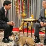 泰王愛犬惹不得!泰男涉侮辱王室遭求刑37年