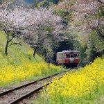 你知道台灣和日本有幾座車站同名嗎?沿途美景滿載,8條姐妹鐵道千萬別錯過!
