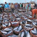 杜宇觀點:別讓血汗漁工拖垮台灣漁業未來