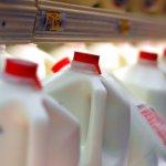 讀者投書:高溫殺菌的鮮乳營養成分較低?營養科學博士打臉!