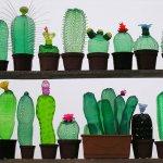 連仙人掌都養不活的你,要不要試試看更懶更環保的「廢物植栽」?