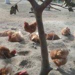 朱淑娟專欄:買雞蛋有指南,你的一元救母雞
