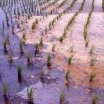 重金屬汙染農地,桃園彰化最為嚴重