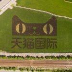 多維觀點》天貓賣台灣米PayEasy有錯嗎?