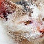 觀點投書:不論原因,虐待動物就是犯罪