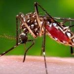 茲卡病毒風暴》美國疾病管制局公布對策 醫師質疑效果不彰
