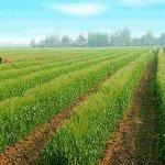 觀點投書:新政府即將迎來的農業挑戰!