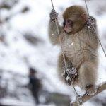 漢字偵查課》猴年到了,我們到甲骨文裡找猴子吧