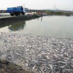漁損求助中央遭拒,高市府:完全不顧漁民死活