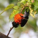 孤獨星球》想一睹「鐵甲武士」原貌?生態觀察家:找到這棵樹的果實就對了!
