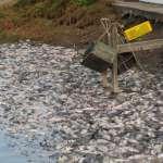 天啊!這些魚全是凍死的!高市府痛批寒害補助全被中央否決