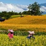 花蓮一年365天都有好風景!嚴選最美的5幅自然景色,你看過幾個?