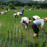來當農夫吧!推動農保滿15年轉國保 青年退休享「雙保」