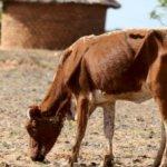非洲南部大旱 辛巴威宣布遭遇嚴重旱災
