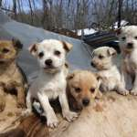 關懷生命協會:人力物力最豐富,北市校犬飼養數卻敬陪末座