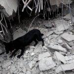 觀點投書:對於地震三大熱門議題的另類思考